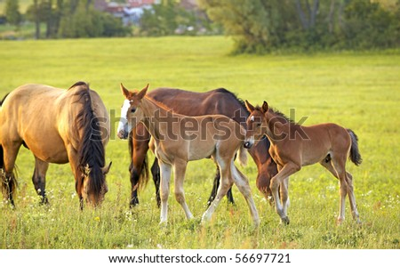 Following mother - stock photo