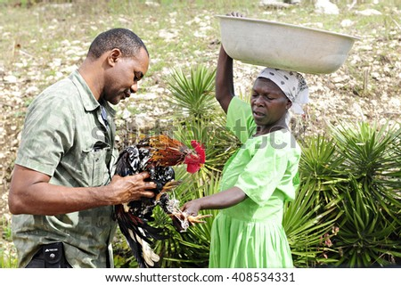 FOND BAPTISTE, HAITI - FEBRUARY 18, 2016:  A Haitian man holding the live rooster he's buying for dinner from a woman on her way to market.  The woman is tying the rooster's feet for easy transport. - stock photo
