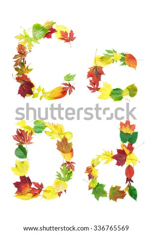 Font made of autumn leaves isolated on white. Letters c and d. - stock photo