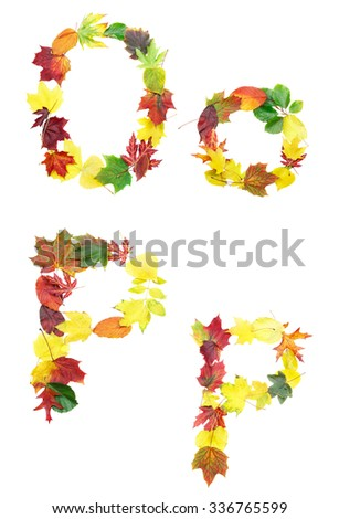 Font made of autumn leaves isolated on white. Letters o and p. - stock photo