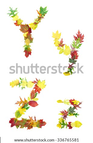 Font made of autumn leaves isolated on white. Letters y and z. - stock photo