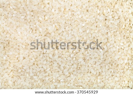 food background - many white short grains of Italica rice