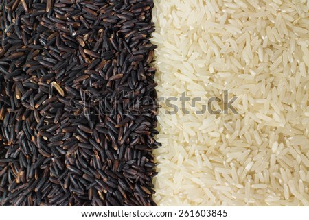 Food background with two rows of rice varieties : berry rice, white (jasmine) rice. - stock photo