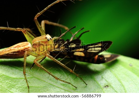 food chain - stock photo