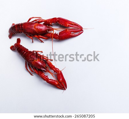 Food. Delicious crayfish on a white background - stock photo