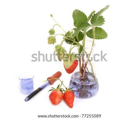 food experiment - stock photo