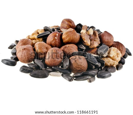 food for squirrels : nuts and seeds , isolated on white background - stock photo