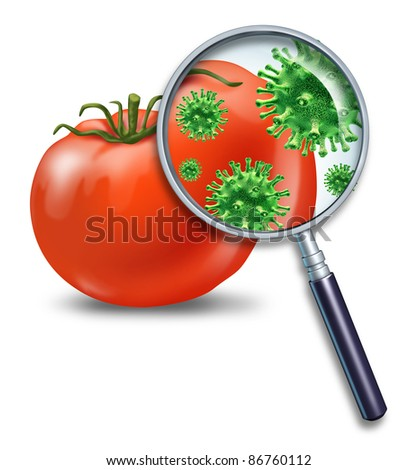 Food safety and inspection symbol with a magnifying glass looking closely at a virus bacterial infection on a tomato for dangers of produce contamination and the health concerns for human consumption. - stock photo