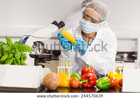 Food scientist looking at corn cob at the university - stock photo