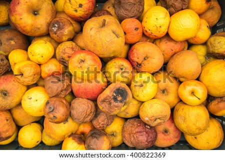 Food waste, a pile of rotting apples. Complete frame filled with apples in various states of decay. - stock photo