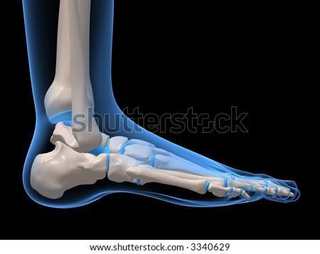 foot - stock photo