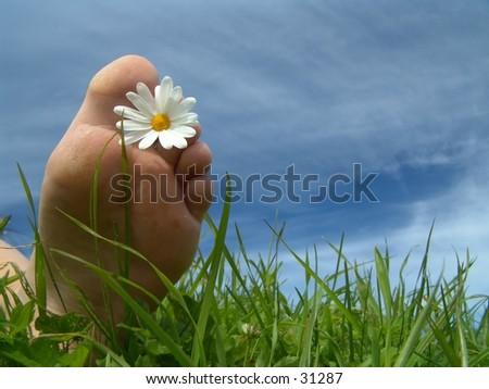 Foot w/daisy. - stock photo