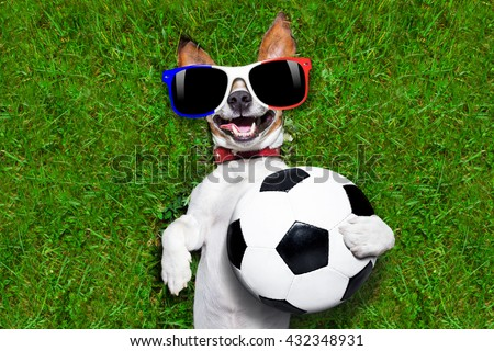 football championship jack russell dog with soccer football ball and french flag lying on grass in park - stock photo