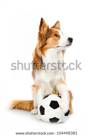 football dog isolated on white - stock photo