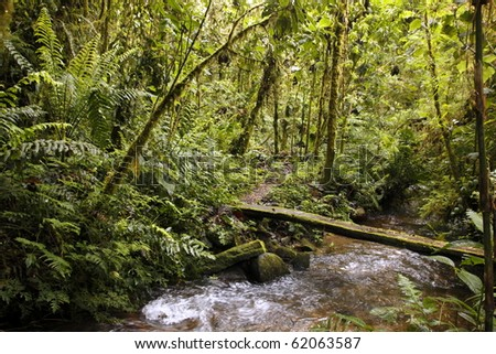 Footbridge over a stream in a cloudforest reserve in the Ecuadorian Andes - stock photo
