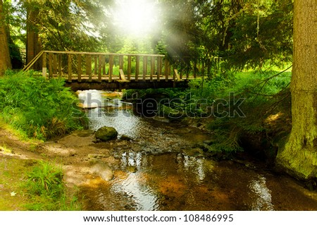 footbridge through green forest