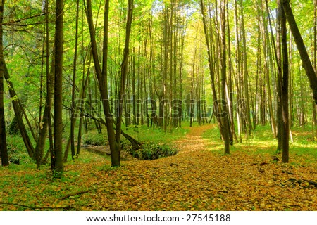 footpath and brook in the forest - stock photo