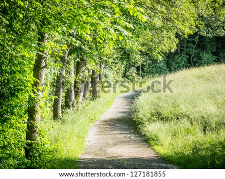 footpath at a forest - nice background
