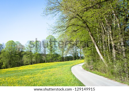 footpath at a forest - nice background - stock photo