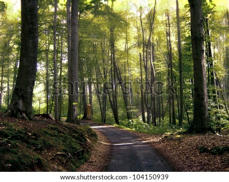 Footpath in beech forest - stock photo