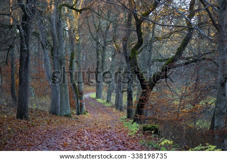 Footpath in beech forest in autumn - stock photo