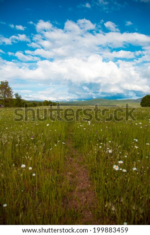 Footpath in camomile field, blue sky with white clouds, harmony - stock photo