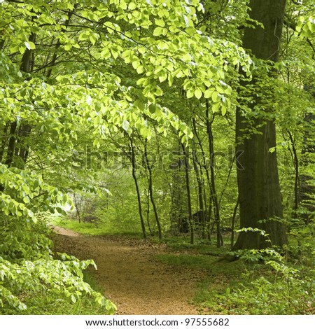 Footpath in Forest, beech tree springtime. - stock photo
