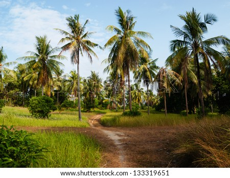 footpath in palm forest  in Phuket Thailand - stock photo