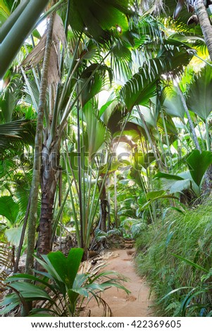 Footpath in palm forest. Vallee de Mai Nature Reserve ( May Valley),  island of Praslin, Seychelles - stock photo