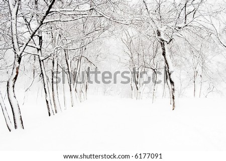 footpath in park during a blizzard - stock photo