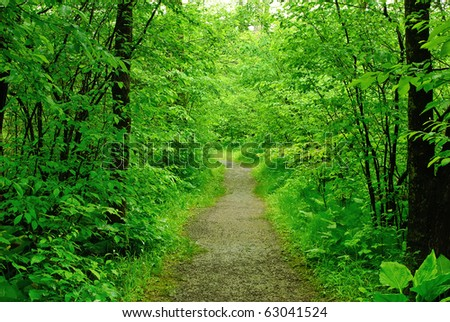 Footpath in summer forest - stock photo