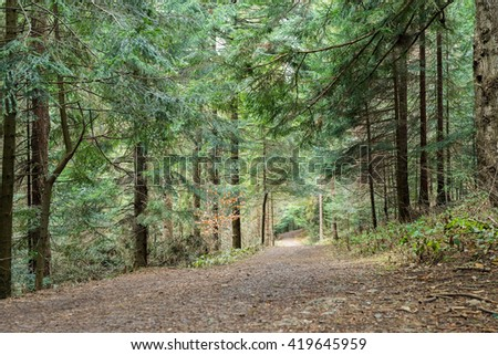 Footpath in the coniferous wood