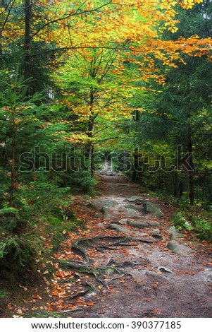 Footpath in the forest, tranquil autumn scenery - stock photo