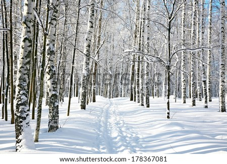 Footpath in winter birch forest - stock photo
