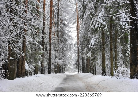 footpath in winter snowy forest - stock photo