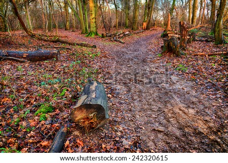 Footpath in woods in winter time - stock photo