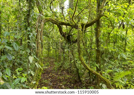 Footpath running under a natural arch formed by lianas in the rainforest understory, Ecuador - stock photo