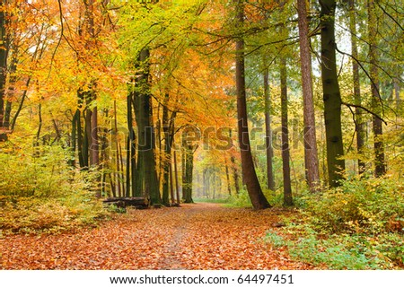 Footpath through a beautiful autumn forest - stock photo