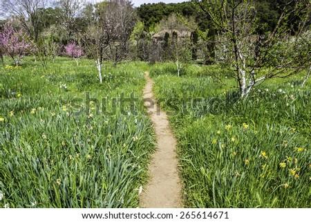 footpath through a English garden - stock photo