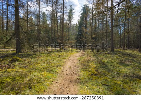 Footpath through a forest in spring - stock photo