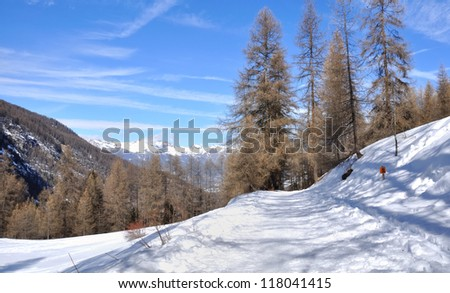 footpath through a larch forest by a beautiful winter day