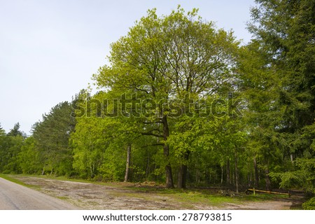 Footpath through a sunny beech forest in spring - stock photo