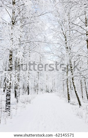 Footpath through birch tree forest - stock photo