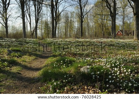 Footpath through spring Swedish forest - stock photo