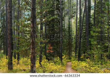 Footpath through the forest - stock photo