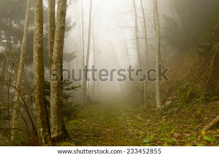 Footpath through the misty forest - stock photo