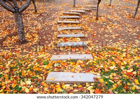 footpath with autumn leaves fall in the garden - stock photo