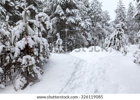 Footpath with traces in snow at wintry forest, nobody - stock photo