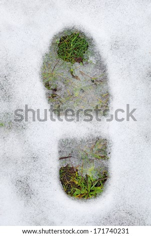 footprint and green grass under snow as abstract first spring steps - stock photo