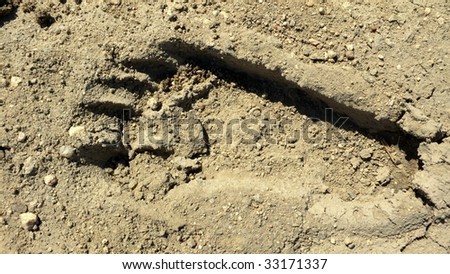 Footprint of a naked human foot in the sand